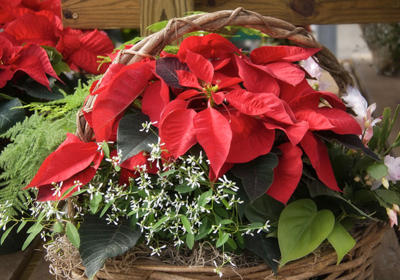 christmas-pot-plants-event-stratford-garden-centre